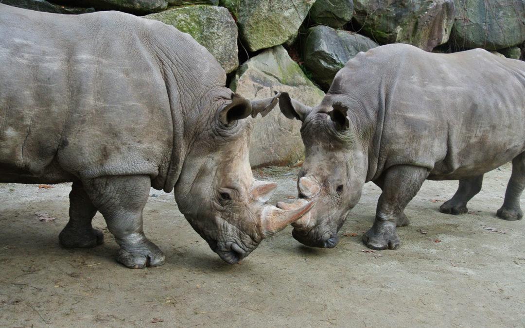 2020 Rhino Encounters